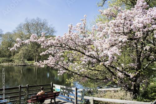 Fototapety, obrazy: European Garden Heritage Network - Dortmund Citys Romberg Park lake in North Rhine Westphalia sunny spring time