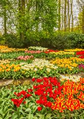 FototapetaTulip flowers in the park Keukenhof flower garden, Holland