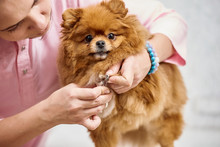 Closeup Of Vet Cutting Dog's Toenail With Nail Clipper