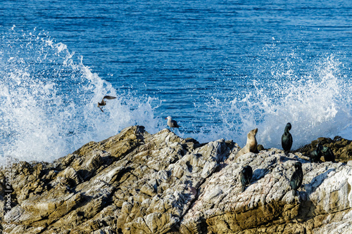 Large rock on western USA coast in Leo Carrillo State Park near Malibu, California Poster