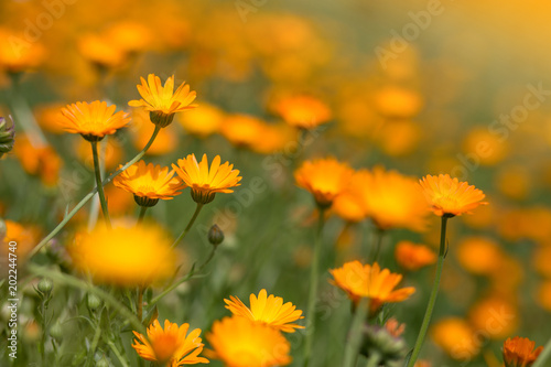 Obraz Colorful flowers landscape - fototapety do salonu