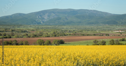 Landscape of Osogovo Mountain from rape field, Bulgaria.