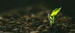 Leinwandbild Motiv Young Plant Growing In Sunlight