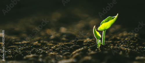 Spoed Foto op Canvas Planten Young Plant Growing In Sunlight