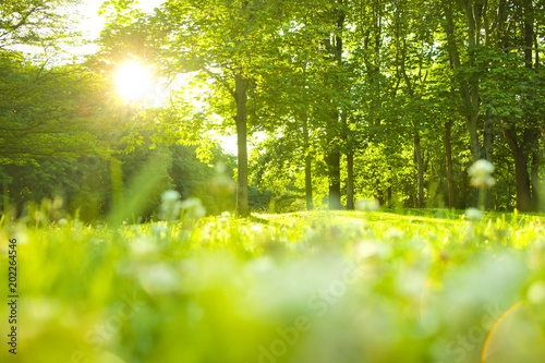 Poster Natuur Forest sunlight