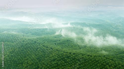Slika na platnu Aerial view of green palm oil plantation