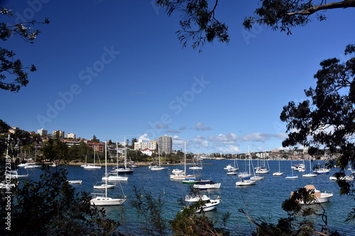 Foto op Canvas Australië Manly buildings skyline from Wellings Reserve. Many yachts in North Harbour at Fourty Baskets Beach. Manly to Spit Bridge Walkway.