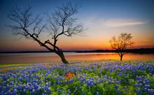Beautiful Texas Spring Sunset ...