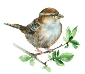 FototapetaWatercolor Sparrow bird