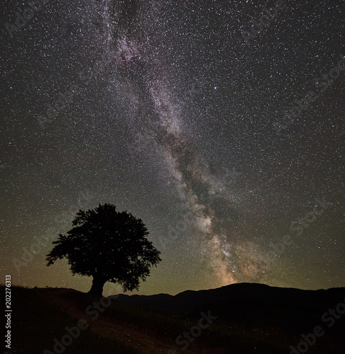 Fotobehang Nacht Silhouette of lonely high tree under wonderful starry night sky and Milky way in the mountains. Panorama