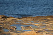 Historic Saline in Marsaskala at the Mediterranean Sea, Malta