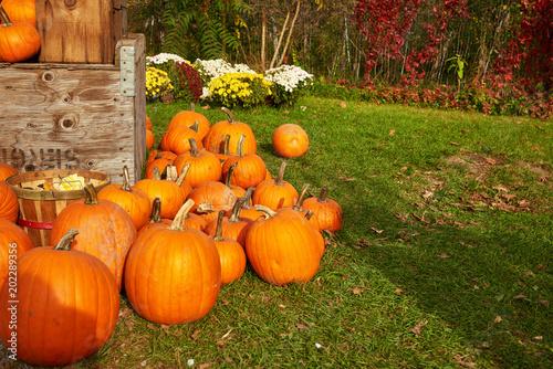 Fotografie, Obraz  Outdoor shot. A rustic autumn still life. Fall harvest display..