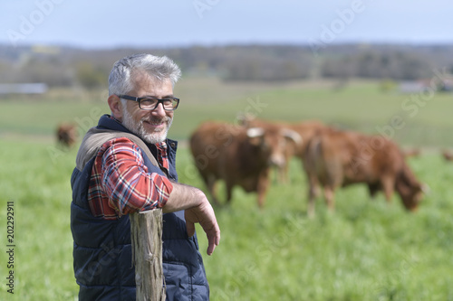 Fotomural  Farmer standing in field with cattle in background
