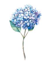 Watercolor Blue Hydrangea Flow...