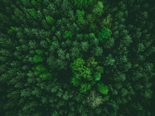 Aerial View Over Forest At Spr...