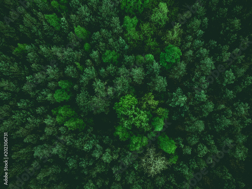 aerial view over forest at spring