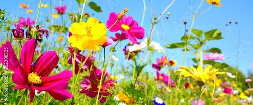 Spoed Foto op Canvas Natuur Blumenwiese - Hintergrund Panorama - Wildblumen Wiese