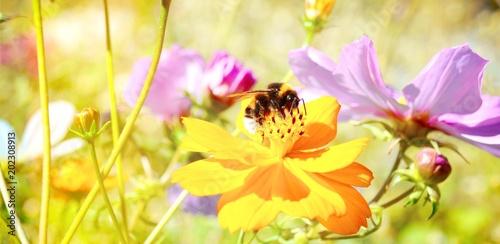 Blumenwiese - Hintergrund Panorama - Wildblumen mit Hummel