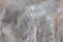 Dry Gray Grass On Nature In Winter