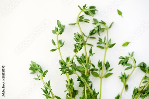 Obraz na plátně  Macro image of bunch of fresh thyme on white background