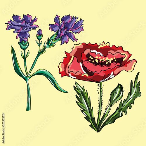Foto auf AluDibond Vögel, Bienen Botanical floral illustration of poppy flower and cornflower.Illustration of flowers. Painted flowers.