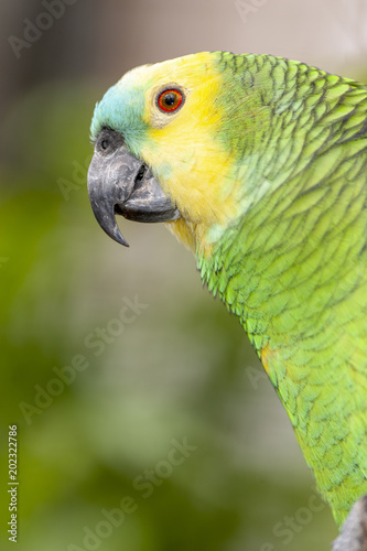 Foto op Canvas Papegaai Colorful Parrot in dense vegetation