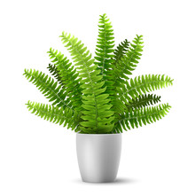 Vector Realistic Fern In A Pot. Ornamental Houseplant.