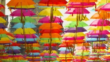 Windswept Colored Umbrellas Ha...