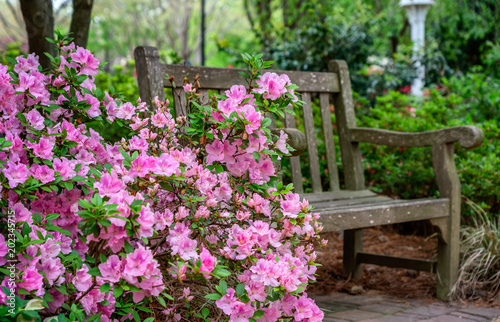 Foto auf Leinwand Azalee Azalea and Flower Garden with bench in Raleigh, North Carolina
