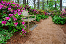 Azalea And Flower Garden With ...