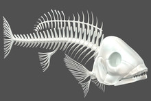 3d Render Of A Fish Skeleton O...