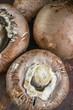 Fresh large Portobello Royal mushrooms with mustard sprouts close-up.