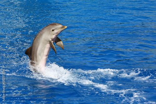 Leinwand Poster Dolphin exhibition in Valencia Aquarium