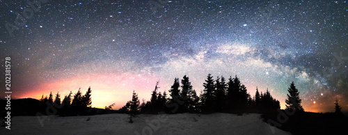 Milky Way over the Fir-trees