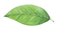 Green Leaf Painting. One Singl...