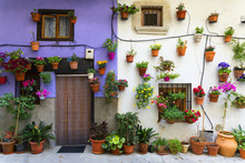 Flower Pots With Flowers On White And Purple Village Wall