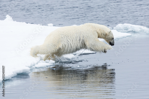 Poster Ijsbeer Eisbär, Spitzbergen, Norwegen, Packeis, Nordpol, Wasser, Eisberg