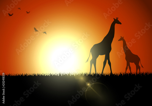 Fotografie, Obraz Giraffe silhouette in sunset at savanah