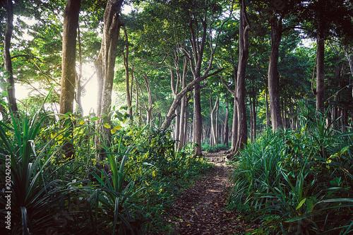 Chodzący ślad w Nowa Zelandia tropikalnym lesie