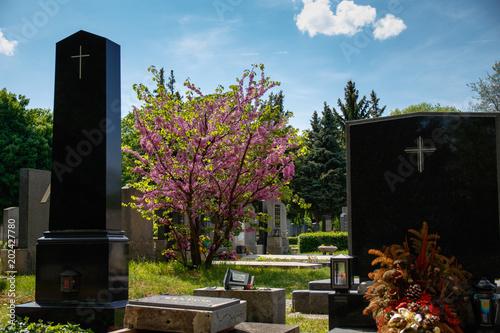Zdjęcie XXL kwitnące drzewo na cmentarzu