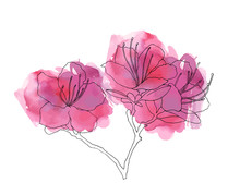 Hand Sketched Rhododendron Led...