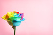 canvas print picture - Amazing rainbow rose flower on color background