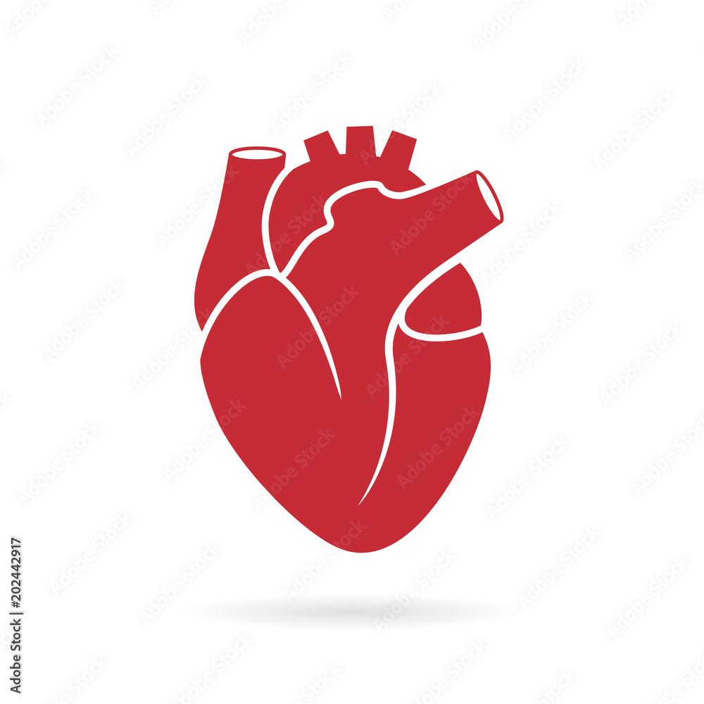Fototapeta Realistic human heart vector drawing