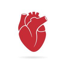Realistic Human Heart Vector D...
