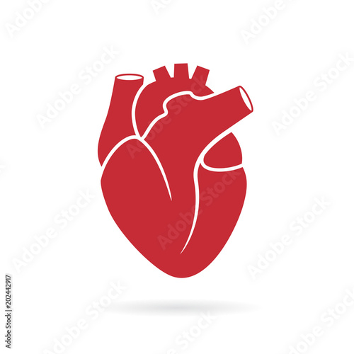 Obraz Realistic human heart vector drawing - fototapety do salonu