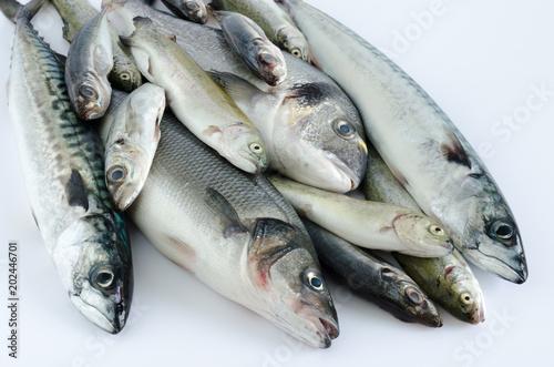 Foto op Plexiglas Vis Freckled fish varied on white background.