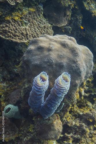 In de dag Onder water Dual barrel sponge