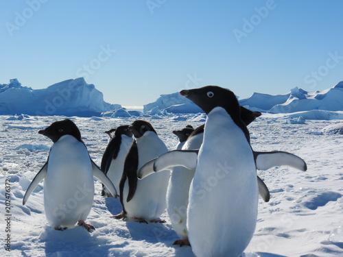 Tuinposter Pinguin Antarctica penguins