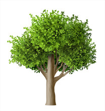 Realistic Vector Tree With Leaves. Plant With Green Foliage. Forest Nature And Ecology