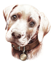 Portrait Of A Cute Brown Labrador Puppy, Hand-drawn. Complaining Glance, Collar With Medallion.